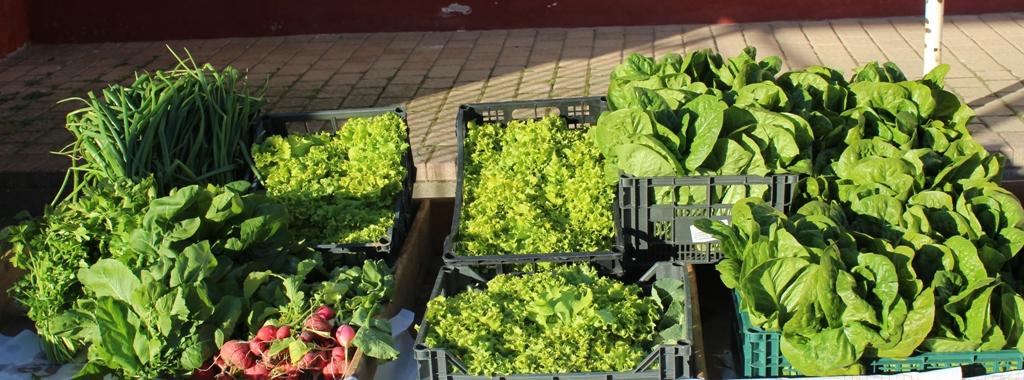 Καλλιέργεια και Συγκομιδή λαχανικών 2016