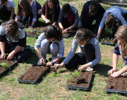 Μεταφύτευση των φυτών μας