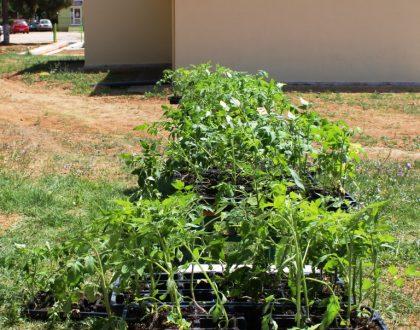Μοίρασμα φυτών 2018