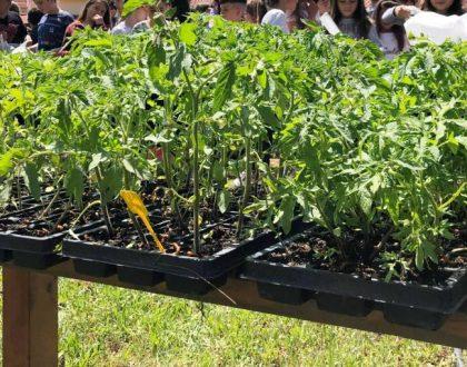 Μοίρασμα φυτών 2019