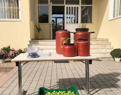 Φτιάχνουμε Πράσινες ελιές στο Σχολείο