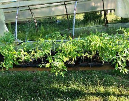 Μοίρασμα φυτών την εποχή του κορονοϊού ..